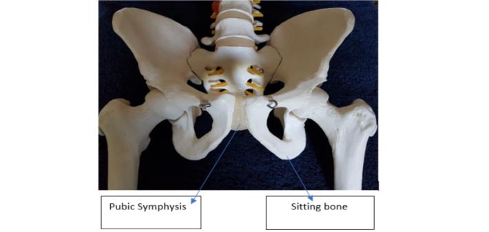 pubic symphysis dysfunction pain